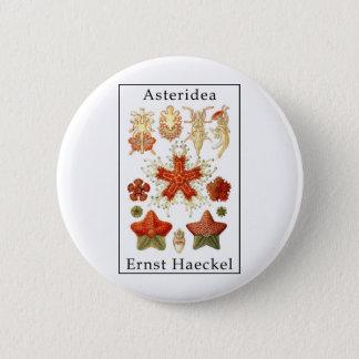 Asteridea by Ernst Haeckel 6 Cm Round Badge