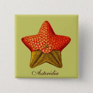 Asteridia (starfish) square button
