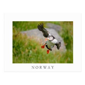 Atlantic Puffin bird flying white text postcard
