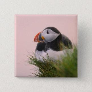 Atlantic Puffin (Fratercula arctica) 6 15 Cm Square Badge
