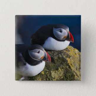 Atlantic Puffin (Fratercula arctica) 7 15 Cm Square Badge