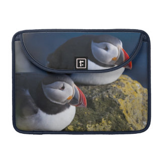 Atlantic Puffin (Fratercula arctica) 7 Sleeve For MacBook Pro