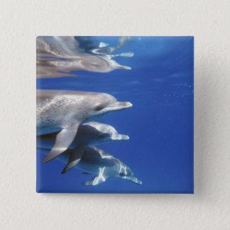 Atlantic spotted dolphins. Bimini, Bahamas. 10 15 Cm Square Badge
