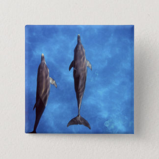 Atlantic spotted dolphins. Bimini, Bahamas. 3 15 Cm Square Badge