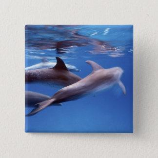 Atlantic spotted dolphins. Bimini, Bahamas. 6 15 Cm Square Badge