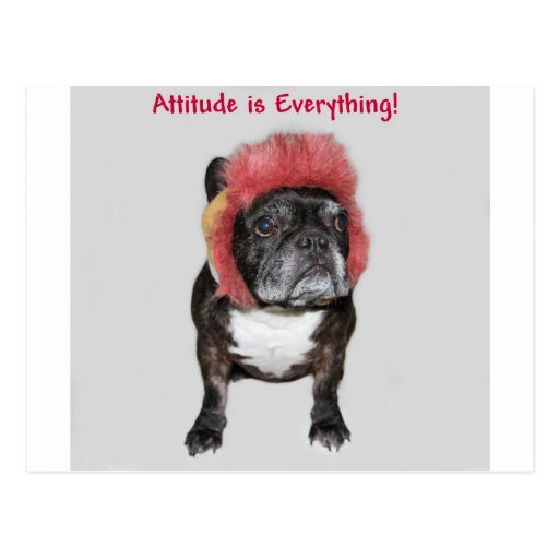 attitude is everything cute dog post card