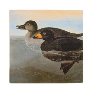 Audubon: Black Scoter Maple Wood Coaster