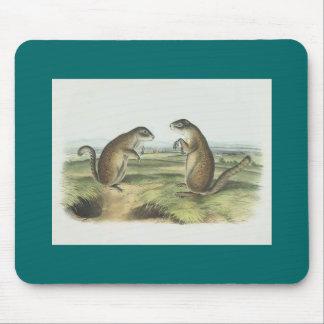 Audubon - Franklin's Marmot Squirrel Mouse Pad