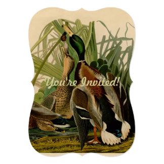 Audubon Mallard duck Bird Vintage Print 13 Cm X 18 Cm Invitation Card