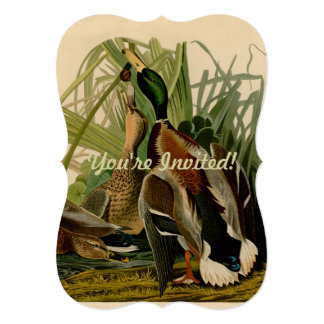 Audubon Mallard duck Bird Vintage Print Card
