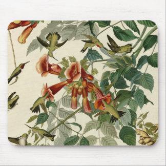 Audubon Ruby Throated Hummingbirds Mouse Pad
