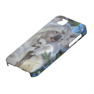 Australia, Koala Phasclarctos Cinereus) iPhone 5 Cases