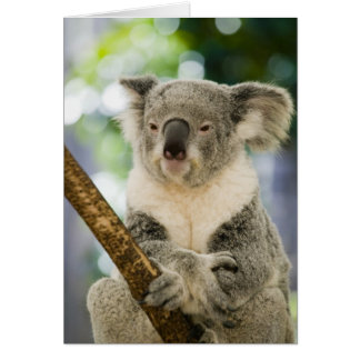 Australia, Queensland, Brisbane, Fig Tree Card