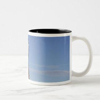 Australia, Western Australia. Emu (Dromaius Two-Tone Coffee Mug