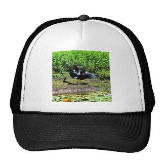 AUSTRALIAN BIRD STORK RURAL QUEENSLAND AUSTRALIA CAP