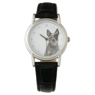 Australian Cattle Dog Watch