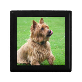 Australian terrier dog jewelry box trinket box