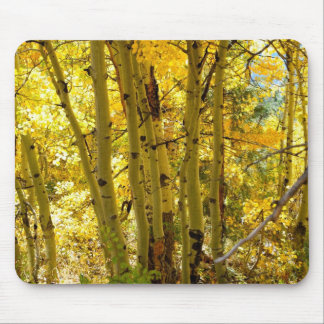 Autumn Aspen Trees Mouse Pad