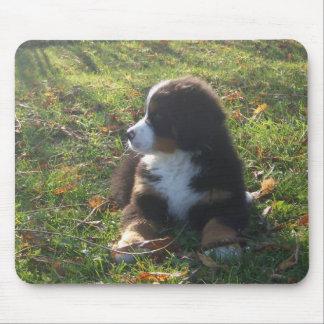 Autumn Bernese Puppy Mousepad