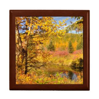 Autumn Birch Tree Gift Box