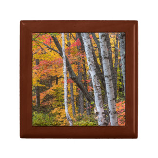 Autumn Color In The Forest Near Copper Harbor Gift Box