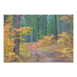 Autumn colors of forests in The Cascade 6 Photo Print