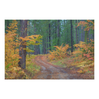 Autumn colors of forests in The Cascade 7 Poster