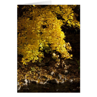Autumn Cottonwood and Stream Card