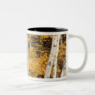Autumn landscape, Vermont, USA Two-Tone Coffee Mug