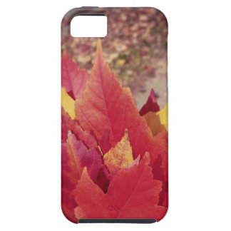 Autumn Leaves iPhone 5 Cases