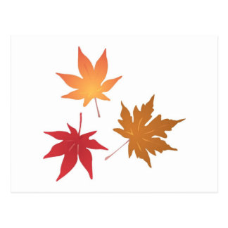 Autumn Maple Leaves Collection Postcard
