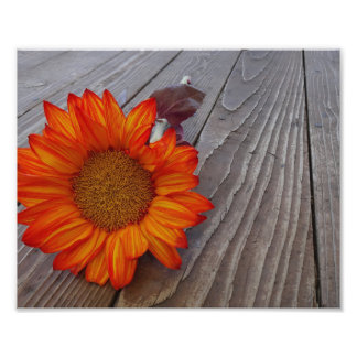 Autumn Orange Sunflower Blossom Photo