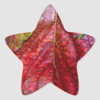 Autumn Red Dogwood Leaf Star Sticker