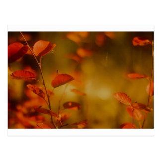 Autumn spider postcard