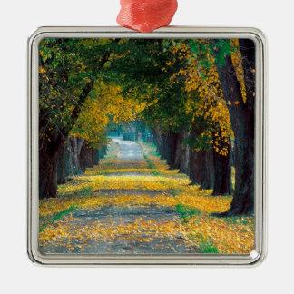 Autumn Tree Lined Roadway Louisville Kentucky Christmas Ornament