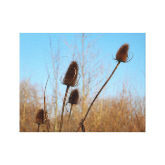Autumnal Teasel Medium Frame Canvas Print