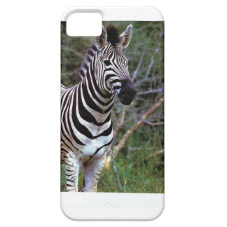 Awesome Zebra on iPhone case