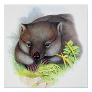 Awesomely cute Australian animal wombat Poster
