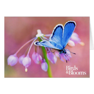 Azure Butterfly Note Card