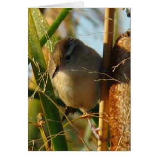 B0003a Marsh Wren Card