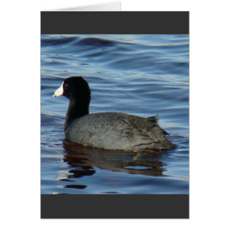 B0027 Common Coot Card