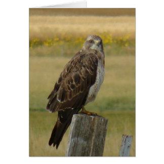 B0033 Swainson's Hawk Card