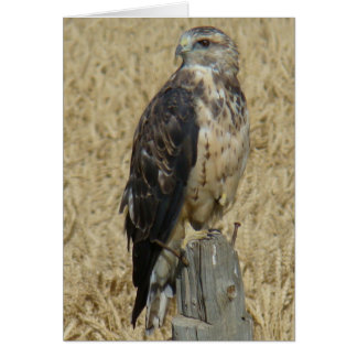 B0036 Ferruginous Hawk Card