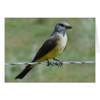 B0044 Western Kingbird Card