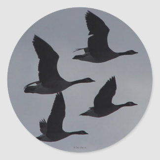 B0046 Canadian Geese in Flight Silhouette Classic Round Sticker