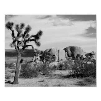 B&W Joshua Tree National Park Poster