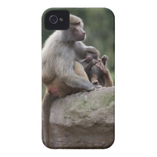 Baboon mother nursing her young iPhone 4 Case-Mate cases