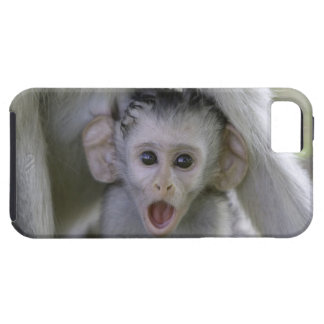 Baby baboon underneath its mother iPhone 5 cases