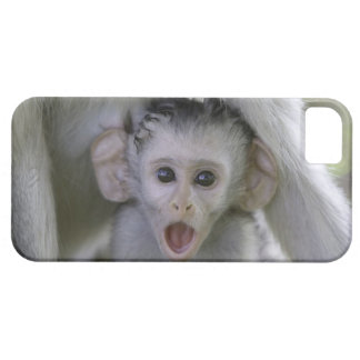 Baby baboon underneath its mother iPhone 5 covers