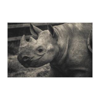 Baby Black Rhino Canvas Prints